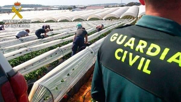 La Guardia Civil, en una explotación fresera