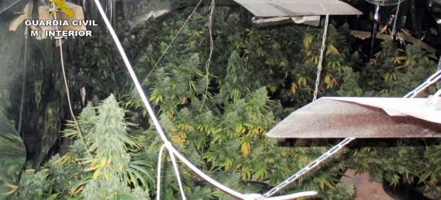 Imagen de la plantación desmantelada