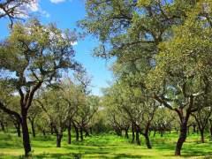 El bosque mediterráneo se reducirá a matorral en 100 años