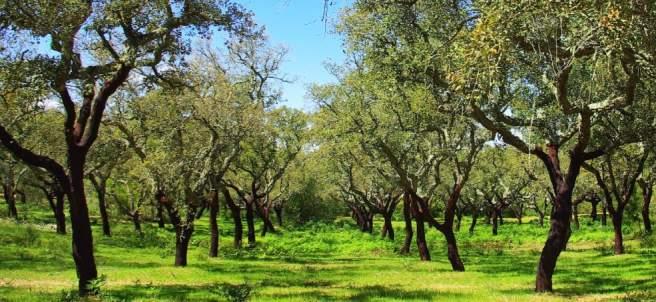 Bosque mediterraneo