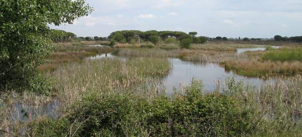¿Qué es el Espacio Natural de Doñana?