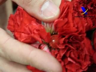 Cocaína en flores