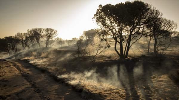 Controlado el incendio en el Parque de Doñana