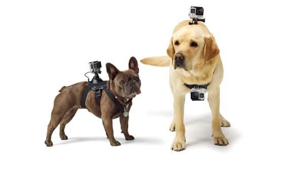 Klettergurt Für Hunde : Gadgets und wearables verbessert das leben von hunden