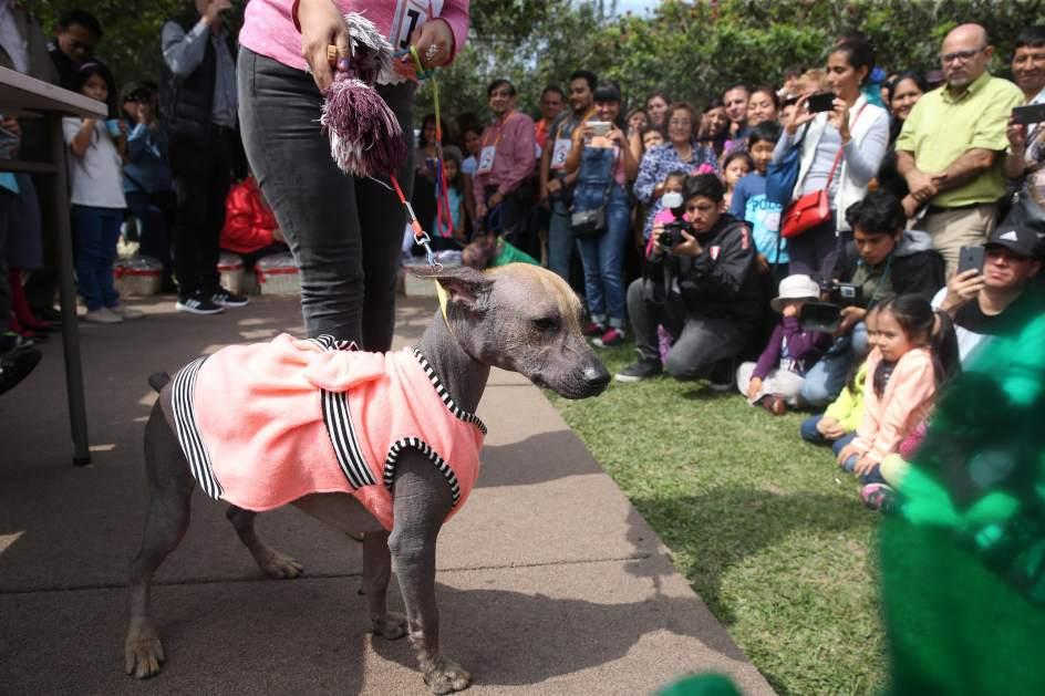 Expectación ante el perro sin pelo. Imagen que muestra a un grupo de personas fotografiando al legendario perro sin pelo de Perú.