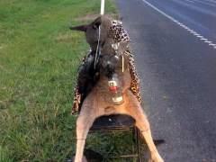 Hallan un canguro abatido y atado a una silla en una carretera de Australia