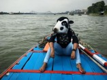 Holy Animal meets the Holy River