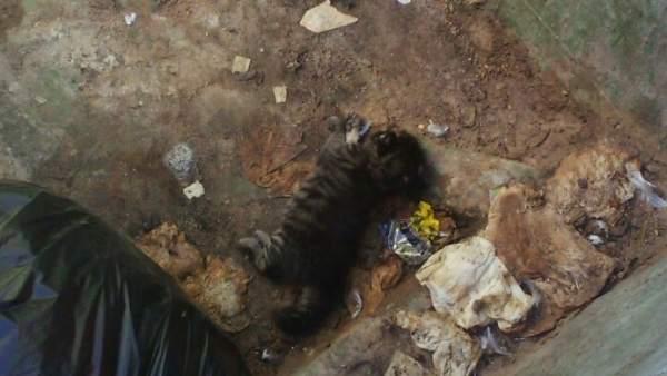 Detenido por golpear hasta la muerte a un cachorro de gato