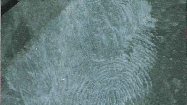 Detalle de una de las huellas encontradas