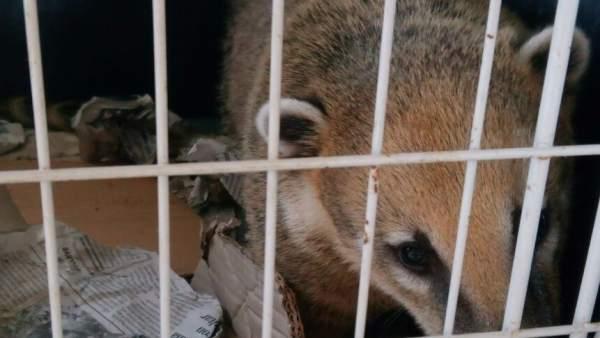 La Generalitat intervé 540 exemplars d'espècies protegides i invasores i 530 paranys il·legals