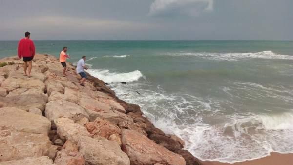 Tintorera en la Playa La Goleta de Tavernes
