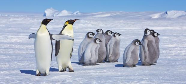 La fauna antártica, amenazada por patógenos esparcidos por los humanos