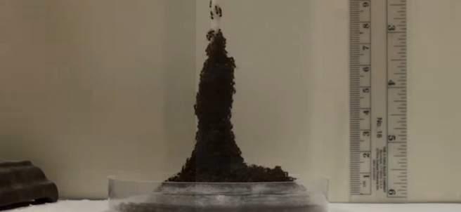 Torre de hormigas rojas