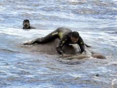 Rescate de elefante en Sri Lanka.