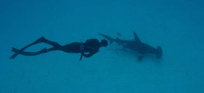 Michael Phelps en la Discovery Shark Week