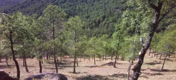 Monte De Pinares