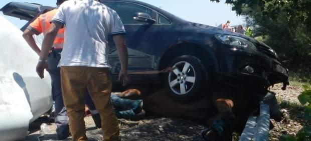 Caballo atrapado debajo de un coche tras volcar el remolque que lo transportaba