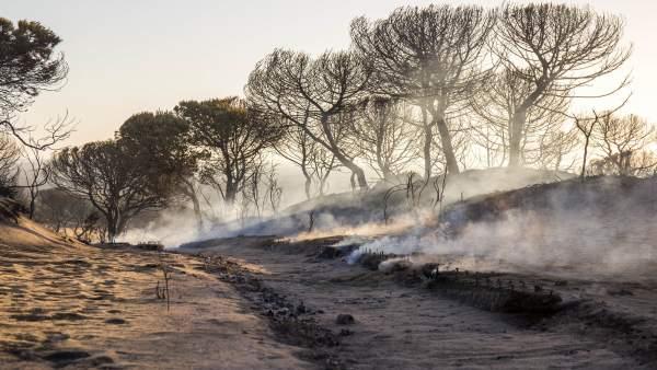 Cuesta Maneli calcinada tras el incendio junto a Doñana