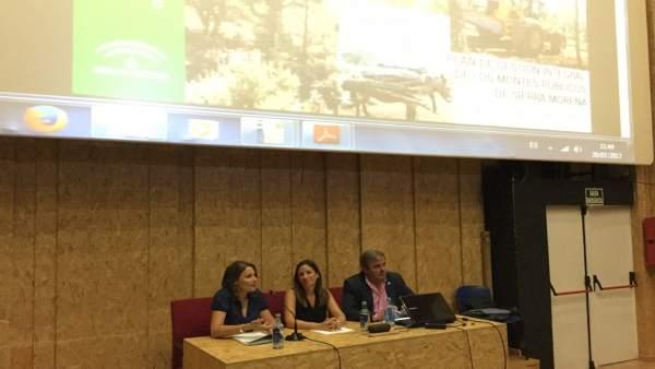 Plan de gestión de los montes públicos en Sierra Morena