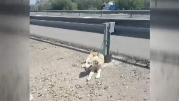 Rescatan a un cachorro abandonado en una carretera