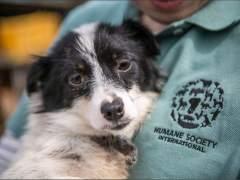 Rescatan a 149 cachorros de ser electrocutados para hacer sopa