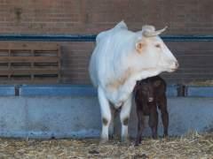 Un tribunal de la India le reconoce a los animales los mismos derechos que a las personas