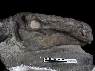 El fósil de dinosaurio mejor conservado del mundo.