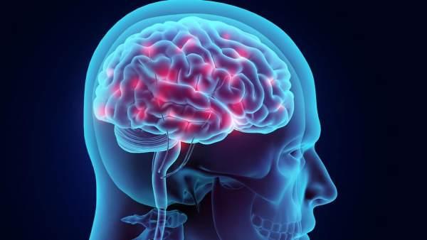 Resultado de imagen de cerebro imagenes