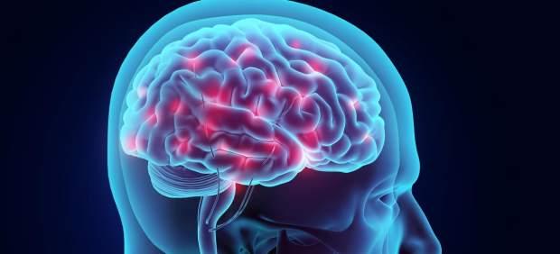 El cerebro ocupa el 2% de nuestra masa corporal.