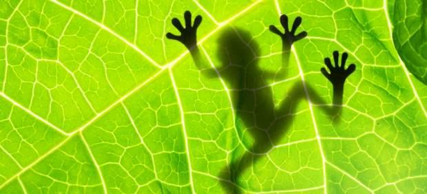Los anfibios actuales proceden de antepasados de 315 millones de años.