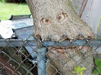 El árbol comedor