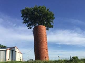 Una zanahoria gigante