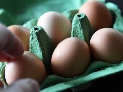 Detectan en Italia huevos infectados por fipronil