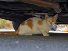 Gato callejero en Alhaurín