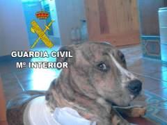 Perro herido por arco