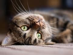 ¿Adoras a los gatos? Agradéceselo a los egipcios