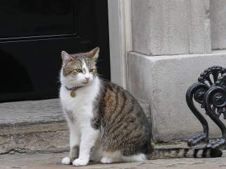 El gato Larry