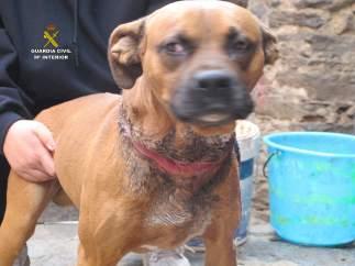 El can maltratado presuntamente por la investigada.