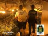 Plantación de marihuana en un sótano de Almerimar