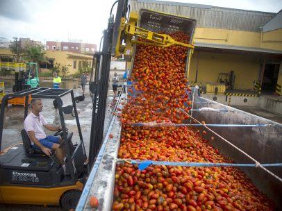 'Munición' para la Tomatina
