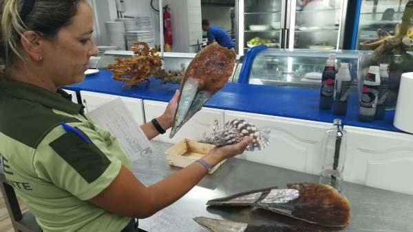 Técnica con un ejemplar de molusco marino protegido