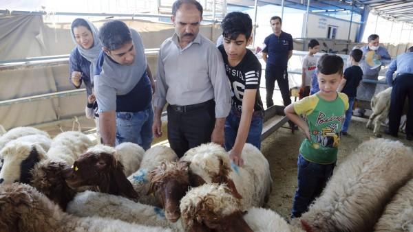 Resultado de imagen de Musulmanes, fiesta del cordero