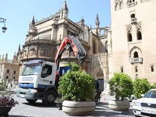 Colocación de macetones en la Plaza Virgen De Los Reyes.