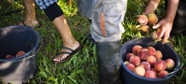 El colapso del melocotón: 50.000 toneladas de frutas de hueso españolas no tienen comprador