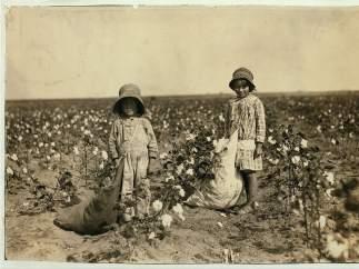 Recogiendo algodón