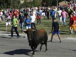 El Toro de la Vega corre por Tordesillas