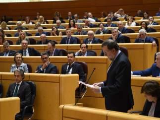 Rajoy en el Senado