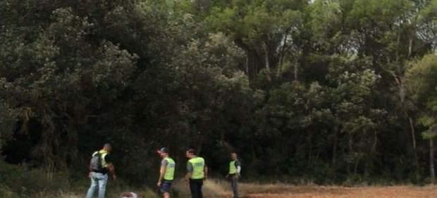Desmantelan una gran plantación de marihuana en la ribera del Fluvià
