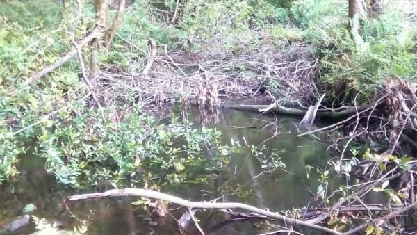 Estado del río a su paso por Arguero.