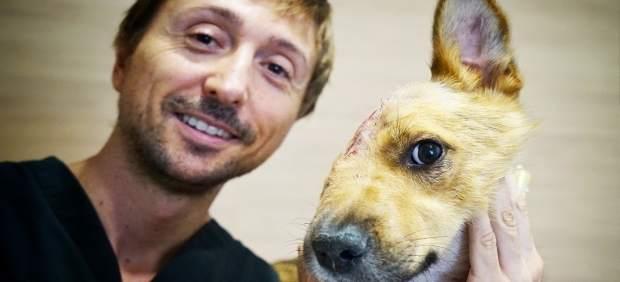 El gos Sky, que va ser brutalment apalissat, torna amb la seua família d'adopció després de superar complexes operacions